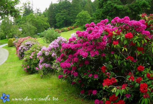 Кусты для сада: выбираем зимостойкие растения