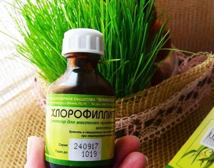 «Хлорофиллипт»: цена вопроса — копейки! 15 проверенных временем рецептов