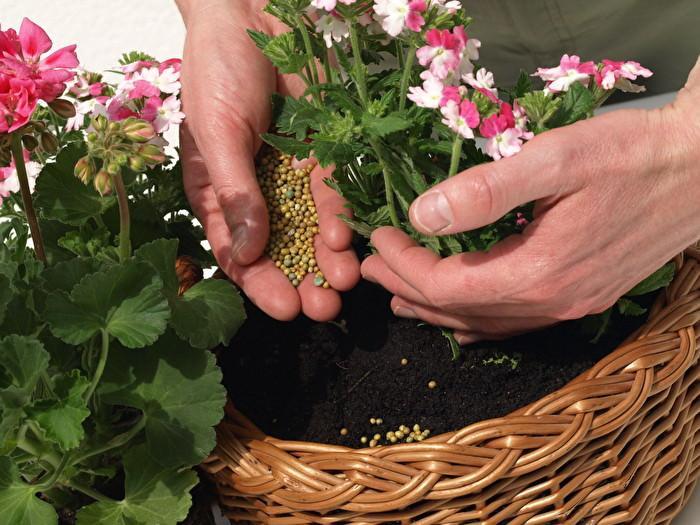 10 самых лучших удобрений для домашних растений